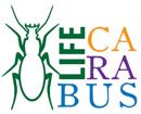 Carabus logo