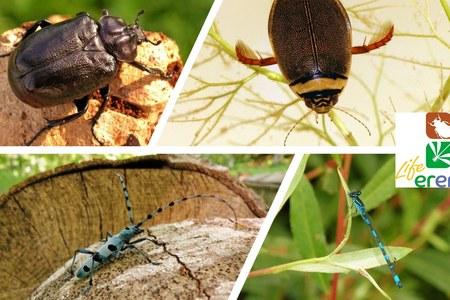22 MAY 2020 – World Biodiversity Day