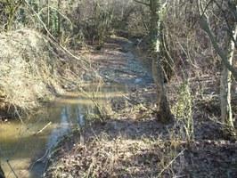 Arianna creek flood