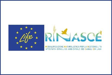 Life Rinasce
