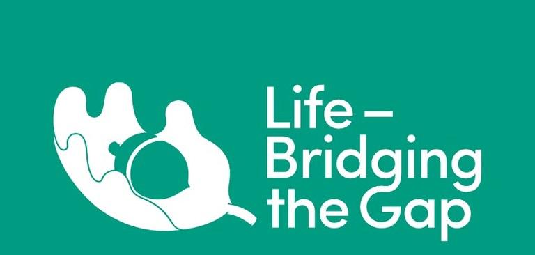Life_bridging.jpg