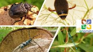 22 maggio 2020 –Giornata mondiale della Biodiversità