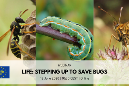 "WEBINAR ""LIFE: Stepping up to save bugs"""