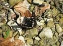 Foto 6 - Farfalla Silvano Azzurro