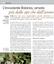 Articolo Agricoltura Robinia