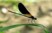 Flora e fauna dei rii: dopo i lavori consultabili i dati