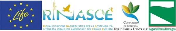 Logo per sito web LIFE RINASCE