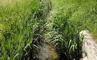 Disponibili i risultati dei rilievi della vegetazione dei canali