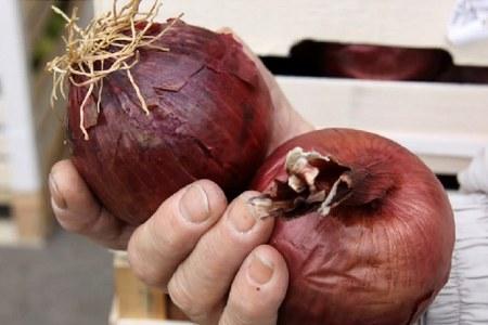 String raccontato a Con i frutti della terra